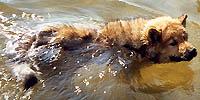 koljaschwimmt